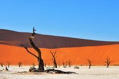 Deadvlei, Sossusvlei Namibia obrazy stock