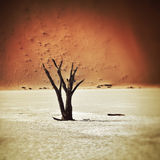 Deadvlei, Sossusvlei. Namibia, Africa. Dead Camelthorn Trees against red dunes in Deadvlei, Sossusvlei. Namib-Naukluft National Park, Namibia, Africa. Filtered stock photography