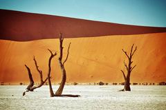 Deadvlei, Sossusvlei. Namibia, Africa. Dead Camelthorn Trees against red dunes in Deadvlei, Sossusvlei. Namib-Naukluft National Park, Namibia, Africa. Filtered stock images