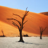 Deadvlei, Sossusvlei. Namibia, Africa. Dead Camelthorn Trees against red dunes in Deadvlei, Sossusvlei. Namib-Naukluft National Park, Namibia, Africa. Filtered stock photo