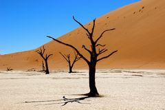 Deadvlei sossusvlei Namibia. Africa shadow dead tree in pan dunen Stock Image