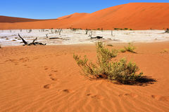 Deadvlei, Sossusvlei. Namibia Stock Photography