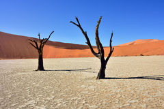 Deadvlei, Sossusvlei. Namibia Stock Photo