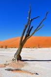 Deadvlei, Sossusvlei. Namibia Royalty Free Stock Photo