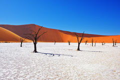 Deadvlei, Sossusvlei. Namibia. Dead Camelthorn Trees against red dunes and blue sky in Deadvlei, Sossusvlei. Namib-Naukluft National Park, Namibia, Africa Stock Image