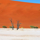 Deadvlei, Sossusvlei. Namibia Royalty Free Stock Photo