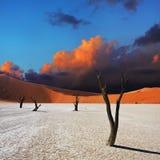 Deadvlei, Sossusvlei. Namibia Stock Image