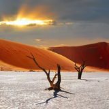 Deadvlei, Sossusvlei. Namibia. Dead Camelthorn Trees against red dunes and dramatic sunset sky in Deadvlei, Sossusvlei. Namib-Naukluft National Park, Namibia stock photos