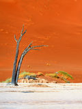 Deadvlei, Sossusvlei. Namibia Stock Photography