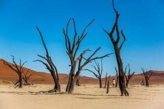 Deadvlei träd royaltyfri bild
