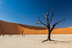 Free Deadvlei Tree Stock Images - 38000374