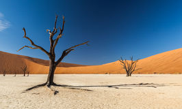 Deadvlei Tree stock images