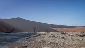 Deadvlei Tree. Deadvlei in Namibia is a flat clay pan characterized by dark, dead camel thorn trees contrasted against the white pan floor stock photo