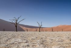 Deadvlei Trees. Deadvlei in Namibia is a flat clay pan characterized by dark, dead camel thorn trees contrasted against the white pan floor stock photography