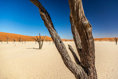 Deadvlei Stock Images