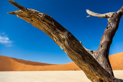 Deadvlei. Is a white clay pan located near the more famous salt pan of Sossusvlei, inside the Namib-Naukluft Park in Namibia Stock Images