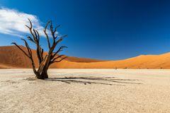 Deadvlei. Is a white clay pan located near the more famous salt pan of Sossusvlei, inside the Namib-Naukluft Park in Namibia Royalty Free Stock Photo