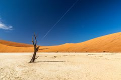 Deadvlei. Is a white clay pan located near the more famous salt pan of Sossusvlei, inside the Namib-Naukluft Park in Namibia Stock Image