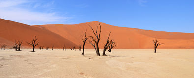 Deadvlei. Is a white clay pan located near the more famous salt pan of Sossusvlei, inside the Namib-Naukluft Park in Namibia Royalty Free Stock Photos