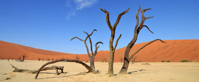 Deadvlei. Is a white clay pan located near the more famous salt pan of Sossusvlei, inside the Namib-Naukluft Park in Namibia Stock Photography