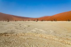 Deadvlei, a white clay pan in Sossusvlei, inside the Namib desert. Deadvlei, a white clay pan with dead acacia trees in Sossusvlei, inside the ib desert stock image