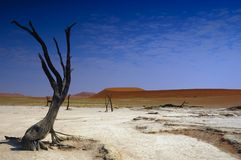 Deadvlei (woestijn Namib) stock fotografie