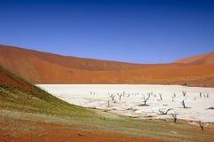 Deadvlei (woestijn Namib) stock foto