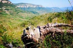 deadwood Foto de archivo