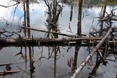 Deadwood. Dead tree in a lake Stock Photo