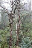 Deadwood, Alpine Region, Victoria, Australia Royalty Free Stock Images