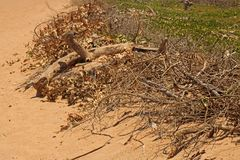 DEADWOOD AND BRANCHES AT THE EDGE OF A BEACH. Image of a dead branches the edge of a sandy beach at the sea in summer royalty free stock photos