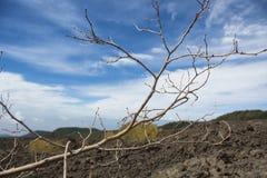 Deadwood con la piedra de la lava Fotos de archivo