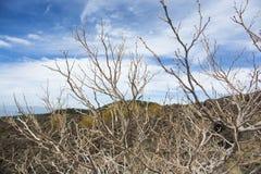Deadwood con la piedra de la lava y el fondo del cielo Imagen de archivo libre de regalías