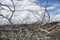 Deadwood con la piedra de la lava y el fondo del cielo Fotografía de archivo