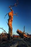 Deadwood in de ochtend Royalty-vrije Stock Afbeeldingen