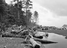 Deadwood deposited on coast. Tree trunks and branches litter the coastal rocky beach.  The supply of dead wood comes from the nearby forest and woods of the Royalty Free Stock Photo