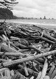Deadwood deposited on coast. Tree trunks and branches litter the coastal rocky beach.  The supply of dead wood comes from the nearby forest and woods of the Stock Photo
