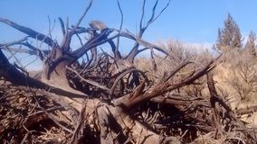 Deadwood desert Stock Photo