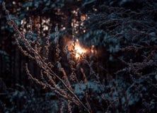 Deadwood en bosque de la puesta del sol Imagenes de archivo