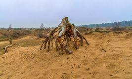 Deadwood on moorland. Deadwood on moorland, Lot of yellow sand stock images
