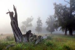 Deadwood in the oak grove Stock Photos