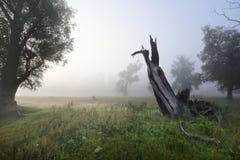 Deadwood in the oak grove Stock Image
