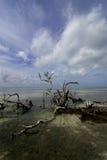 Deadwood in oceaan Stock Foto