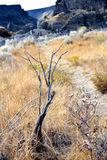 Deadwood on path in Shoshone Falls Park, Idaho, USA. Royalty Free Stock Images