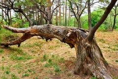 The deadwood Royalty Free Stock Photo