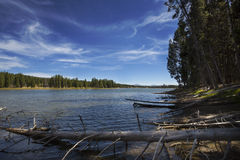 Deadwood on shores of Yellowstone River, Wyoming. Stock Image