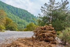 Deadwood on a side of a road in mountains. royalty free stock images