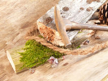 Deadwood still life Royalty Free Stock Photo