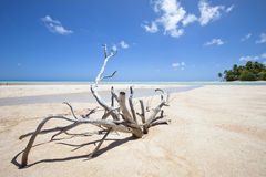 Deadwood on white sand beach Royalty Free Stock Images