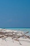 Deadwood on white sand beach Stock Image